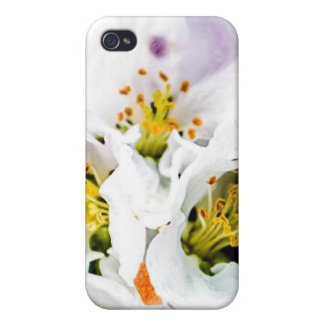 beautiful flowers mf iPhone 4/4S cover