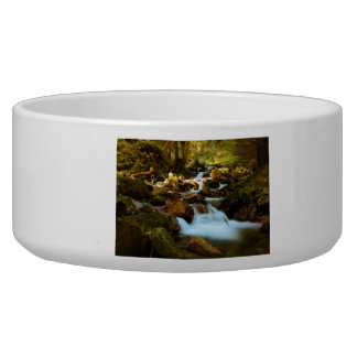 Beautiful forest in autumn dog bowls