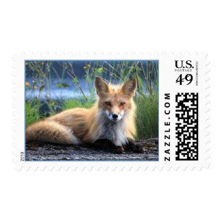 Beautiful Fox Stamp