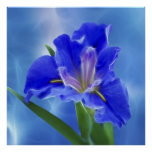 Beautiful fractal iris and its meaning poster