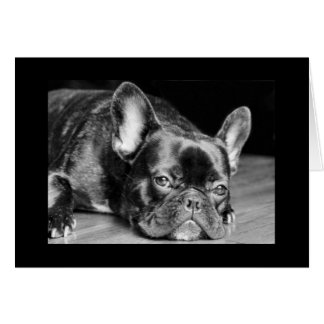 Beautiful Frenchie, French Bulldog Card