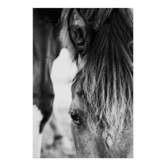 "Beautiful friend Horse ""poster"" Poster"