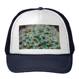 Beautiful Frilly dorsal surface of the lettuce slu Trucker Hat