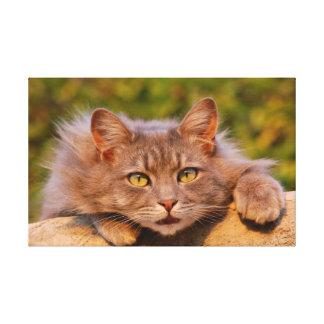 Beautiful furry cat outside portrait canvas print