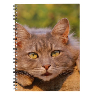 Beautiful furry cat outside portrait spiral note book