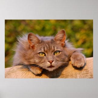 Beautiful furry cat outside portrait poster