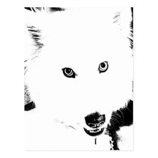 Beautiful furry Samoyed white dog Post Cards