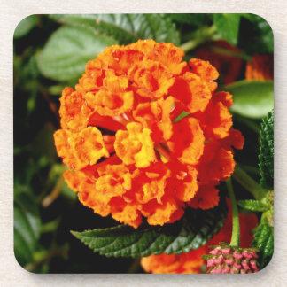 Beautiful Garden Bloom Coaster Set