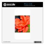 beautiful garden flower in orange skin for iPhone 4S