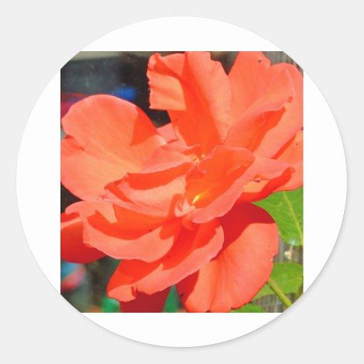 beautiful garden flower in orange stickers