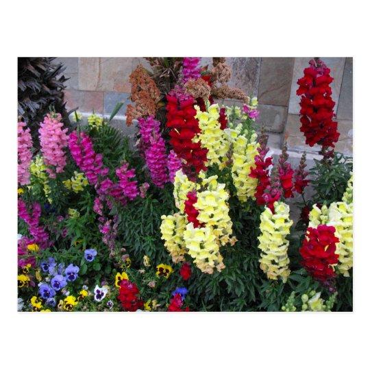 Beautiful Garden Postcard