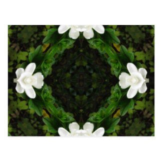 Beautiful Gardenia 5 Kaleidoscope 3 Postcard