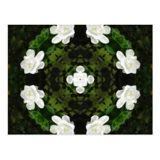 Beautiful Gardenia 5 Kaleidoscope 5 Postcard