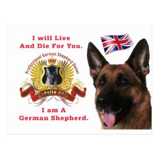 Beautiful German Shepherd Post Card