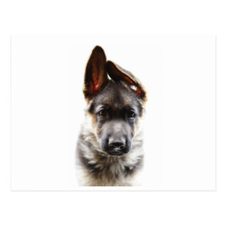 Beautiful German Shepherd Puppy Postcard