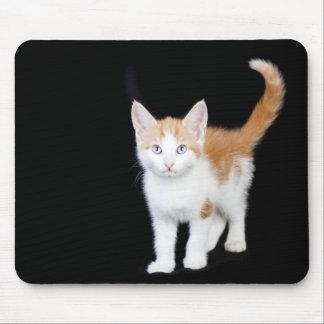 beautiful ginger and white kitten mousepad