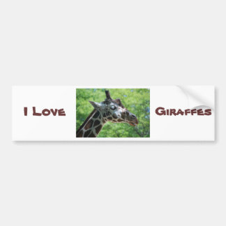Beautiful Giraffe Car Bumper Sticker