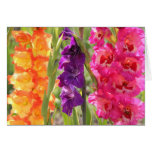 Beautiful Gladiolus Blooms Card