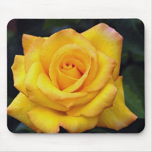 Beautiful Gold medal Grandiflora Rose, 'Aroyqueli' Mouse Pad