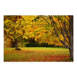 Beautiful Golden Autumn Leaves Poster