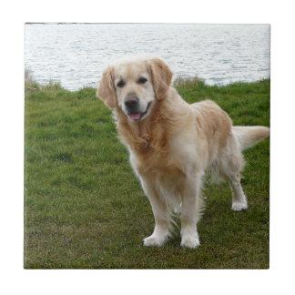 Beautiful Golden Retriever Dog Standing Ceramic Tile