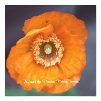 beautiful golden wild poppy flower all party card