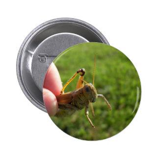 Beautiful Grass Hopper In Hand Pin