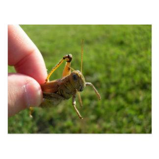 Beautiful Grass Hopper In Hand Postcard