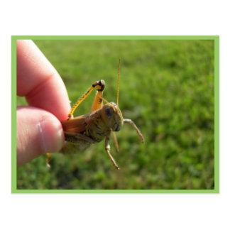 Beautiful Grass Hopper In Hand Postcards