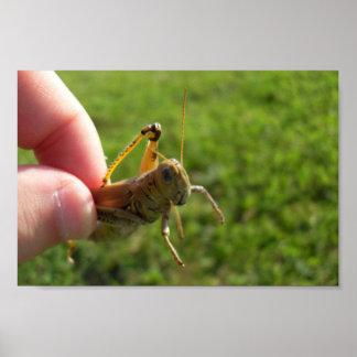 Beautiful Grass Hopper In Hand Poster