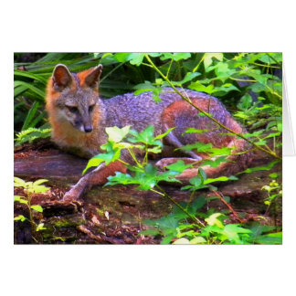 Beautiful Gray Fox Card