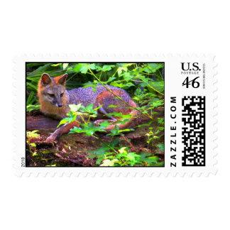 BEAUTIFUL GRAY FOX STAMP