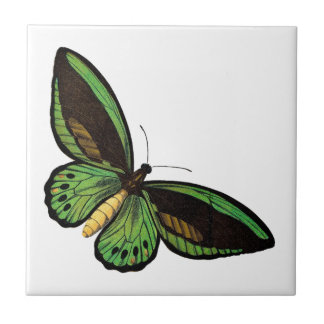 Beautiful Green Butterfly Ceramic Tile