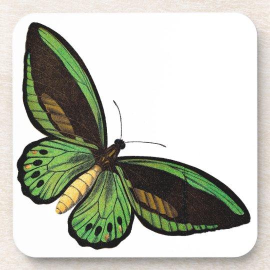 Beautiful Green Butterfly Drink Coaster