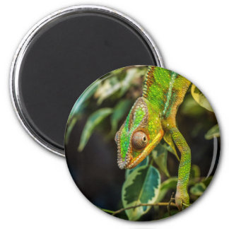 Beautiful green chameleon magnet