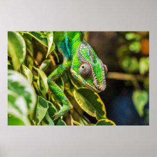 Beautiful green chameleon poster