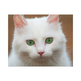 Beautiful green eyed white cat canvas print