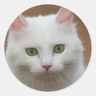 Beautiful green eyed white cat portrait. classic round sticker