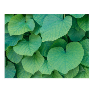 Beautiful green heart-shaped leaves nature photo postcard