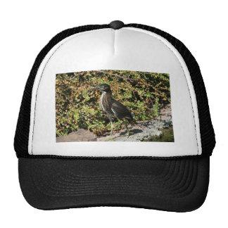 Beautiful Green Heron Hats