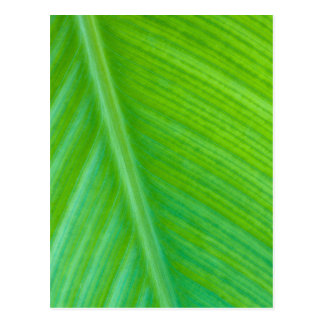 Beautiful Green Leaf Macro Photo Postcard