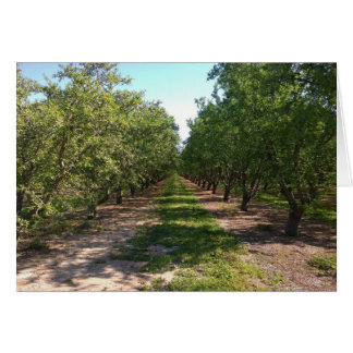 Beautiful Green Neverending Orchard Row Card