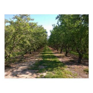 Beautiful Green Neverending Orchard Row Postcard