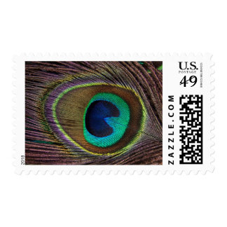 Beautiful Green Peacock Feather Postage