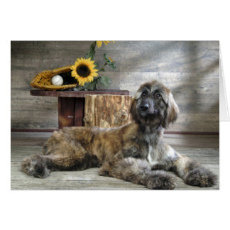 Beautiful Grey Afghan Hound Dog Card