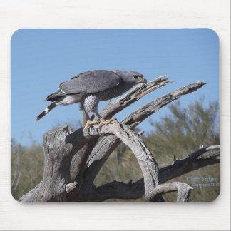 Beautiful Grey Hawk mouse pad