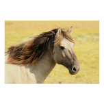 Beautiful grey wild horse poster