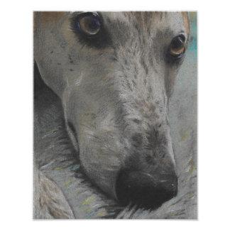Beautiful greyhound eyes art print