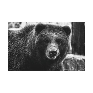 Beautiful Grizzly Bear Photo Gallery Wrapped Canvas