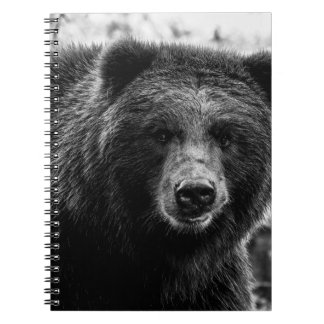 Beautiful Grizzly Bear Photo Spiral Notebooks